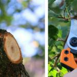 Guide: Så beskär du enklast dina träd och häckar