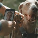 Stilla oron – nu kan du träffa en veterinär genom mobilen, gratis