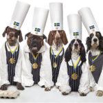 Nyhet: Världens mest svenska hundmat