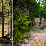 5 goda skäl att resa till Lofsdalen i sommar
