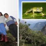 Listan: 5 skäl att bevara regnskogen