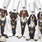 Nyhet: Sveriges första ekologiska och KRAV-märkta hundmat