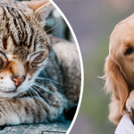 Du kan hjälpa djuren med ditt testamente
