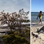 Julklappstips: Gör Stockholms skärgård vackrare – som Skärgårdsvän