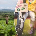 För barns rätt till tobaksfria liv