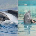 """Så kan du bidra till bättre liv för världens delfiner: """"Låt detta bli den sista generationen i fångenskap"""""""