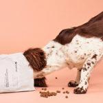 Högkvalitativ hundmat som är rik på protein från insekter