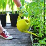 Så kommer du igång med att odla dina egna grönsaker