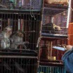 Skriv på listan – mot global handel med vilda djur